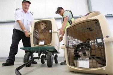 Правила перевозки домашних животных различными видами транспорта